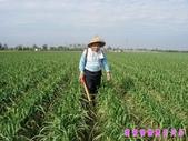 日誌用相簿(1):農作物~~自然生態 7.jpg