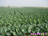日誌用相簿(1):農作物~~自然生態 5.jpg