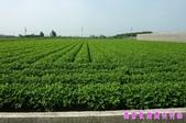 日誌用相簿(1):農作物~~自然生態 6.jpg
