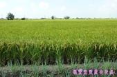 日誌用相簿(1):農作物~~自然生態 4.jpg
