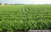 2019-2020農作物:P1040898-2.jpg