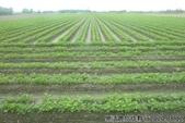 2019-2020農作物:P1040893-2.jpg