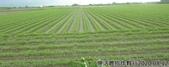 2019-2020農作物:P1040894-2.jpg