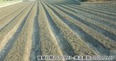 2019-2020農作物:P1040917-3.jpg