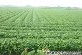 2019-2020農作物:P1040900-2.jpg