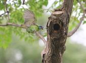 大安森林公園拍五色鳥!:DPP_0016.JPG