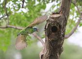 大安森林公園拍五色鳥!:DPP_0017.JPG