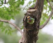 大安森林公園拍五色鳥!:DPP_0019.JPG
