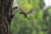 大安森林公園拍五色鳥!:DPP_0020.JPG