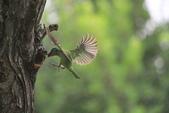 大安森林公園拍五色鳥!:DPP_0021.JPG