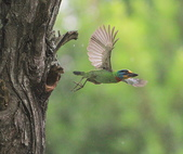 大安森林公園拍五色鳥!:DPP_0022.JPG