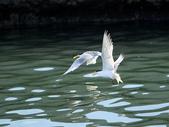 大溪漁港拍燕鷗!:DPP_0022.JPG