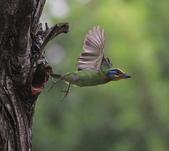 大安森林公園拍五色鳥!:DPP_0023.JPG