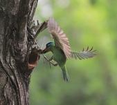 大安森林公園拍五色鳥!:DPP_0026.JPG