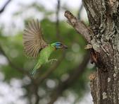 大安森林公園拍五色鳥!:DPP_0031.JPG
