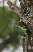 大安森林公園拍五色鳥!:DPP_0032.JPG