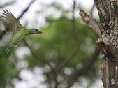 大安森林公園拍五色鳥!:DPP_0033.JPG