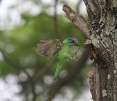 大安森林公園拍五色鳥!:DPP_0035.JPG