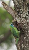 大安森林公園拍五色鳥!:DPP_0037.JPG