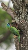 大安森林公園拍五色鳥!:DPP_0039.JPG