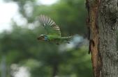 跑去拍五色鳥囉!:DPP_0001.JPG