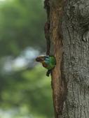 跑去拍五色鳥囉!:DPP_0012.JPG