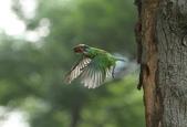 跑去拍五色鳥囉!:DPP_0013.JPG