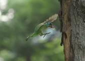 跑去拍五色鳥囉!:DPP_0014.JPG