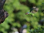 五色鳥生態記錄!102.06.19.:DPP_0013.JPG
