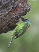 大安森林公園拍五色鳥!:DPP_0006.JPG