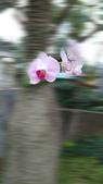 蘭花飄香:20160206_164604.jpg