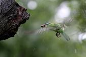 大安森林公園拍五色鳥!:DPP_0007.JPG
