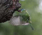 大安森林公園拍五色鳥!:DPP_0008.JPG