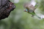 大安森林公園拍五色鳥!:DPP_0009.JPG