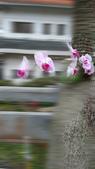 蘭花飄香:20160206_164650.jpg
