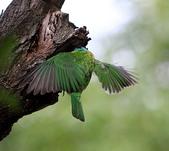 大安森林公園拍五色鳥!:DPP_0011.JPG
