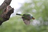 大安森林公園拍五色鳥!:DPP_0012.JPG
