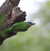 大安森林公園拍五色鳥!:DPP_0014.JPG