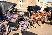 Egypt -花絮篇:觀光客坐的馬車