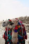 Egypt - Cairo 開羅:等著載客的駱駝-1