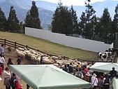 清境廬山1218'04:羊妹妹大遊行