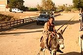 Egypt -花絮篇:小毛驢-2