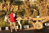 Egypt -花絮篇:毛驢車