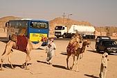 Egypt -花絮篇:招攬騎駱駝