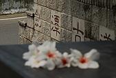 五月雪桐花祭之苗栗造橋篇@May'08:DSC_5123-w.jpg