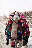 Egypt - Cairo 開羅:妝扮華麗的駱駝