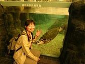 菊島的秋天1015'05:我與海龜