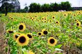 向陽農場:IMGP1603.jpg