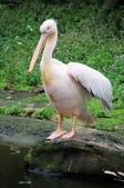 2012動物園:IMGP9669.JPG
