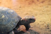 2012動物園:IMGP9566.JPG